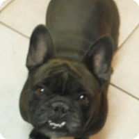 Adopt A Pet :: Cricket Pending - Alpharetta, GA