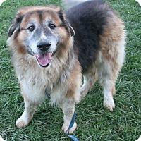 Adopt A Pet :: BEAR (courtesy post) - Elyria, OH