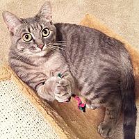 Adopt A Pet :: Luna - Youngsville, NC