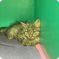 Adopt A Pet :: Robin - Saylorsburg, PA