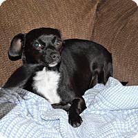 Adopt A Pet :: Ebony - Chester, SC