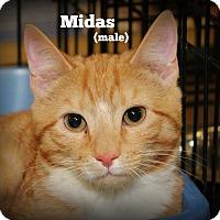 Adopt A Pet :: Midas - Springfield, PA