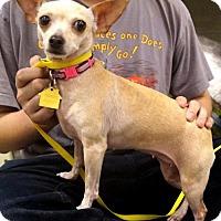 Adopt A Pet :: Mona - Carrollton, TX