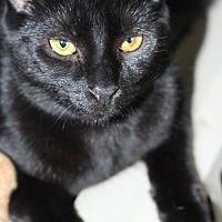 Adopt A Pet :: Selena - Elkton, MD