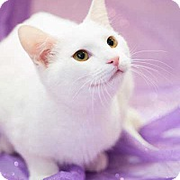 Adopt A Pet :: Neil (BABYKINS) - Oviedo, FL