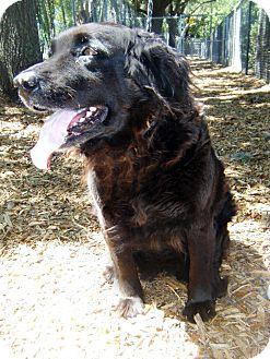 Retriever (Unknown Type) Mix Dog for adoption in Largo, Florida - Abby