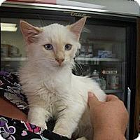 Adopt A Pet :: Ike - Walnut, IA