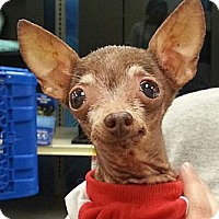 Adopt A Pet :: Chrissy - Orlando, FL
