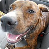 Adopt A Pet :: Schatzi - Conyers, GA