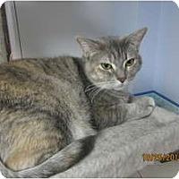 Adopt A Pet :: Rosey - Sterling Hgts, MI