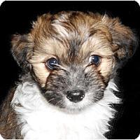 Adopt A Pet :: Harrison - La Costa, CA