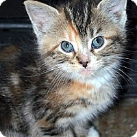 Adopt A Pet :: Trina *ADOPTION PENDING! - Xenia, OH