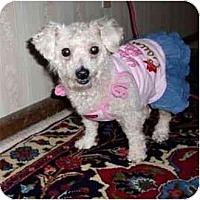 Adopt A Pet :: Eve - Mooy, AL