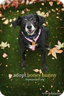 Beagle Mix Dog for adoption in Mission, Kansas - Honey Bunny