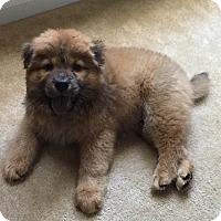 Adopt A Pet :: QUINCY - Dix Hills, NY