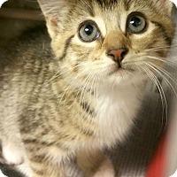 Adopt A Pet :: Alvita - Chattanooga, TN