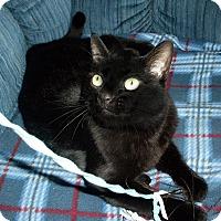 Adopt A Pet :: Rosie - Marina del Rey, CA