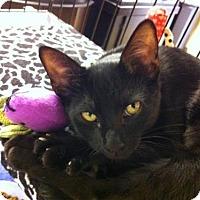Adopt A Pet :: Brandon - Watkinsville, GA