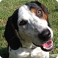 Adopt A Pet :: Otis - Homewood, AL