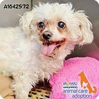 Adopt A Pet :: Daisy Duke (FL) - Gainesville, FL