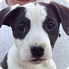 Adopt A Pet :: Outlaw (10 lb)