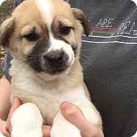 Adopt A Pet :: ZEKE - look how adorable - Pewaukee, WI