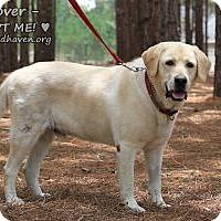 Adopt A Pet :: Hoover - Minneola, FL