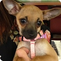 Adopt A Pet :: Katie - S. Pasedena, FL