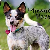 Adopt A Pet :: Minnie Pearl - Joliet, IL