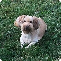 Adopt A Pet :: Bonnie - Alden, NY