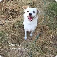 Terrier (Unknown Type, Small) Mix Dog for adoption in Monrovia, California - CHANCE