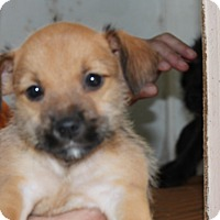 Adopt A Pet :: India - Harmony, Glocester, RI