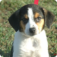 Adopt A Pet :: MOLLY - Sanford, ME