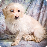 Adopt A Pet :: PRISSY - Anna, IL