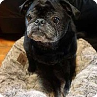Adopt A Pet :: Bacchus - Sudbury, MA