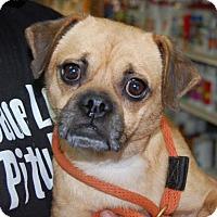 Adopt A Pet :: Calhoun - Brooklyn, NY