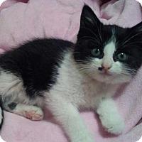 Adopt A Pet :: Mojie C1551 - Shakopee, MN