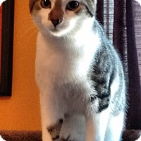 Adopt A Pet :: Remey - Carlisle, PA