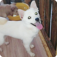 Adopt A Pet :: Dora - Fairfax, VA