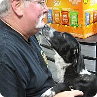 Adopt A Pet :: Maggie - Rockwall, TX