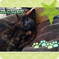 Adopt A Pet :: Motley - Tampa, FL