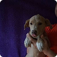 Adopt A Pet :: Ebony - Oviedo, FL