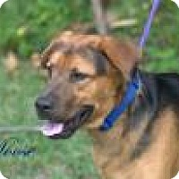 Adopt A Pet :: Moose - Middleburg, FL