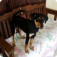 Adopt A Pet :: Carter - Atchison, KS