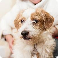 Adopt A Pet :: Eddie (Has Application) - Washington, DC