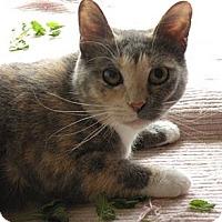Adopt A Pet :: Holly - Rohrersville, MD