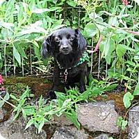 Adopt A Pet :: JETTA - Portland, OR