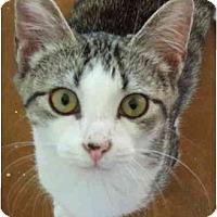 Adopt A Pet :: Dollar - Lake Charles, LA