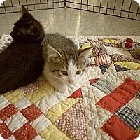 Adopt A Pet :: Nokolai - Silver Lake, WI