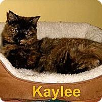 Adopt A Pet :: Kaylee - Medway, MA